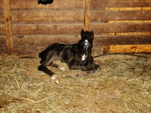 Its a filly!