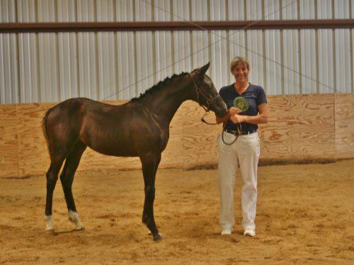 All Foals go Gold!