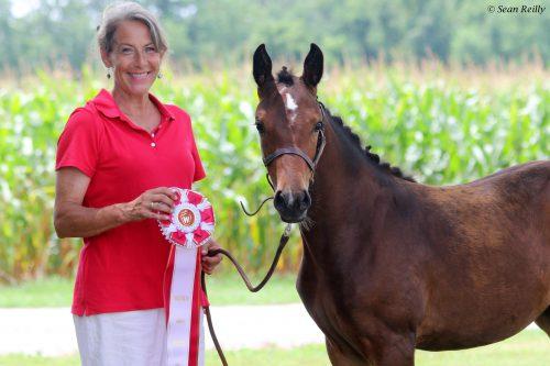 German Riding Pony, Premiere of Edenhof, is Westfalen Site Champion!!!