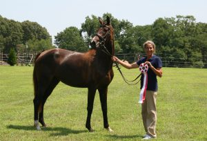 "Imported mare wins Site Champion and ""Premium""!!!"